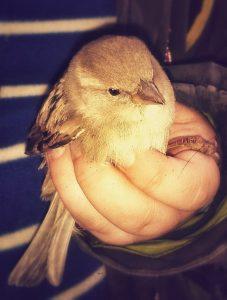 bird-in-the-hand-949969_1280