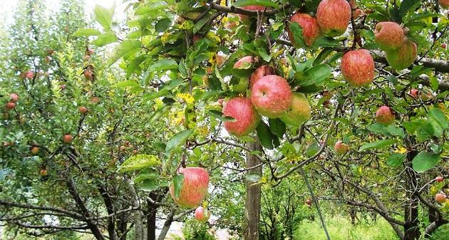 Permalink to An Apple a Day Keeps the Doctor Away – Part Two